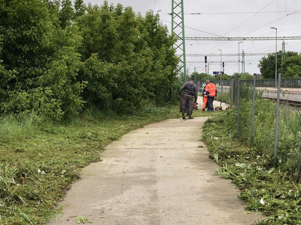 A Tárnoki Köz-Ért Kft. munkatársai lekaszálták a füvet a vasútállomáshoz vezető úton, Tárnokon.